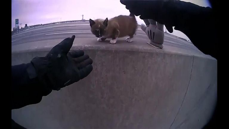 A Missouri police officer has a furry sidekick after making a rescue on an interstate highway just before Christmas.