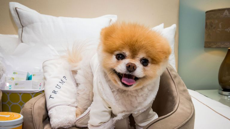 Boo the Pomeranian dog has died at the age of 12