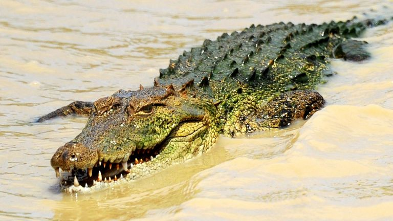 The crocodile was being fed by Deasy Tuwo when it attacked her. File pic