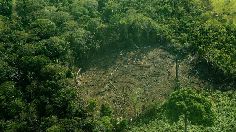 Cutting meat production would reduce deforestation
