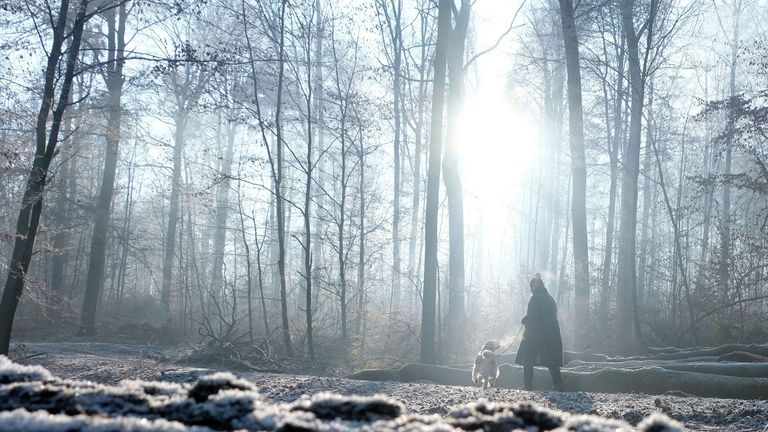 A woman walks with her dog through the forest on a frosty January 1, 2017 in Stuttgart, southern Germany. / AFP / dpa / Bernd Weissbrod / Germany OUT (Photo credit should read BERND WEISSBROD/AFP/Getty Images)