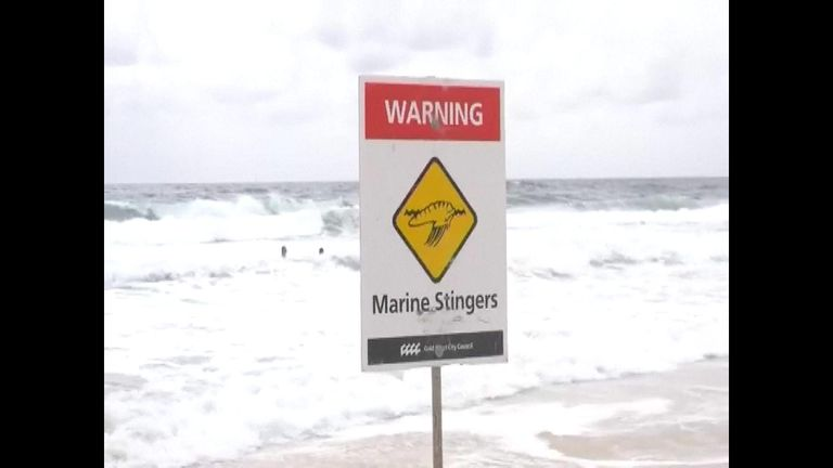 Some Queensland beaches were closed due to jellyfish
