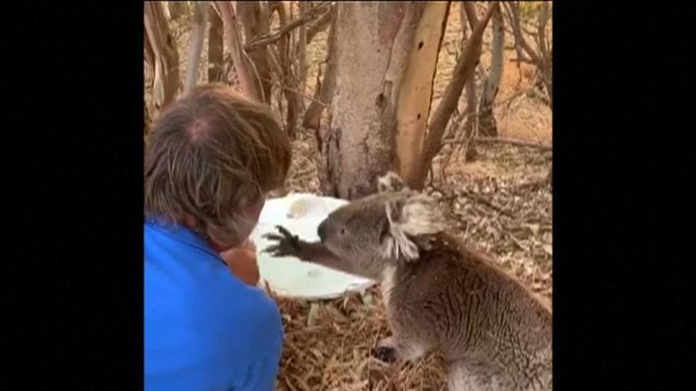 Michele, who shot video of the encounter, said her husband spent over two hours tending to the thirsty koala.