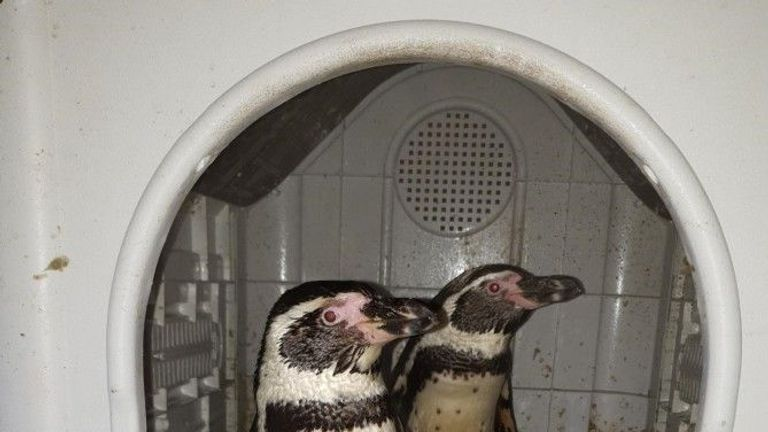 Happy Feet: Pair rescued after being taken from zoo