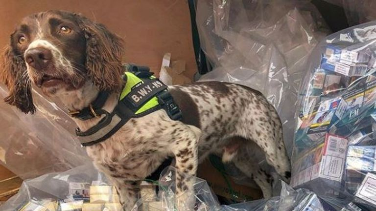 The clever canine has sniffed out £6m of illegal tobacco. Pic: BWY Canine/Instagram