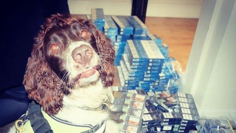 Scamp once managed to sniff out a £25,000 haul from a shop ceiling. Pic: BWY Canine/Instagram