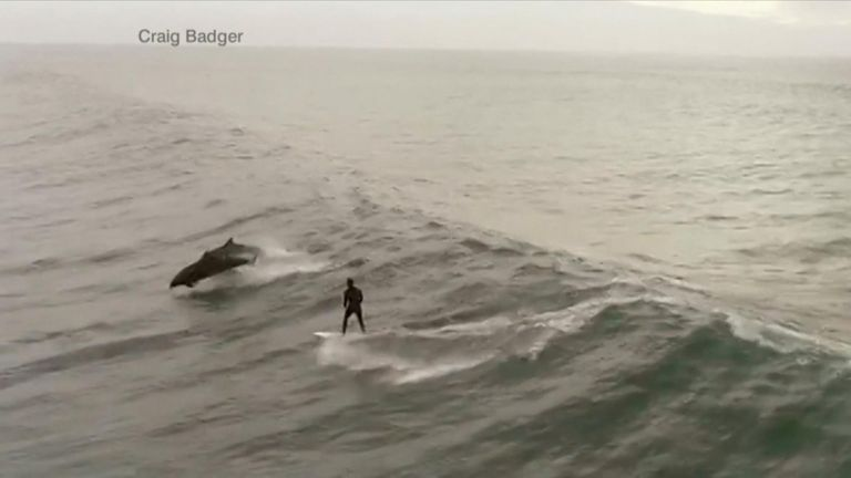 Breathtaking footage shows a firefighter being filmed surfing with a pod of dolphins off the coast of Ventura, California.