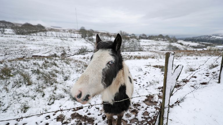 Animals outside Belfast endured snowy conditions on Wednesday