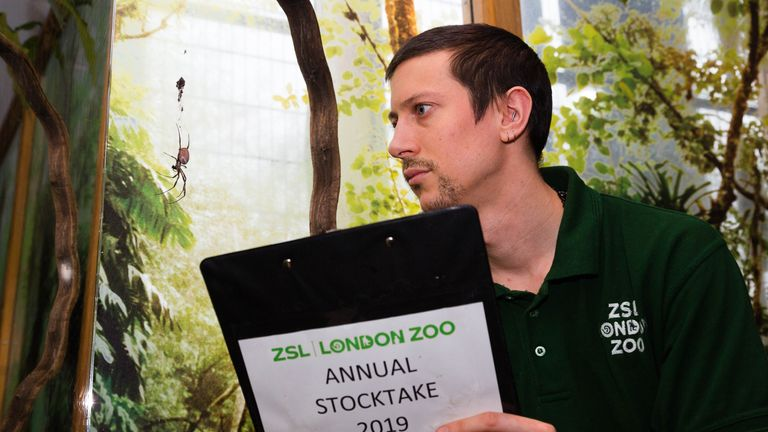 Jamie Mitchell observes the golden orb spiders at the spider walkthrough