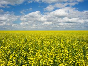 90% of China's canola imports are from Canada