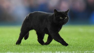 Black cat stops play at Goodison Park!