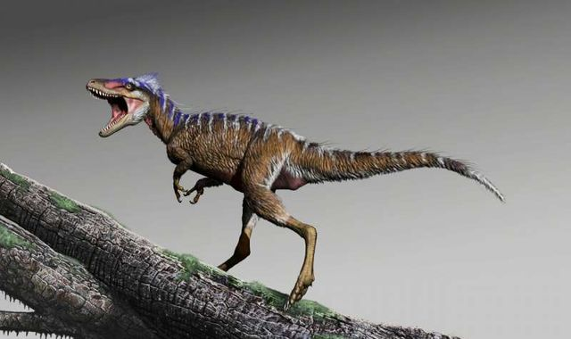 Tiny T-Rex discovery shows how it became king of the dinosaurs