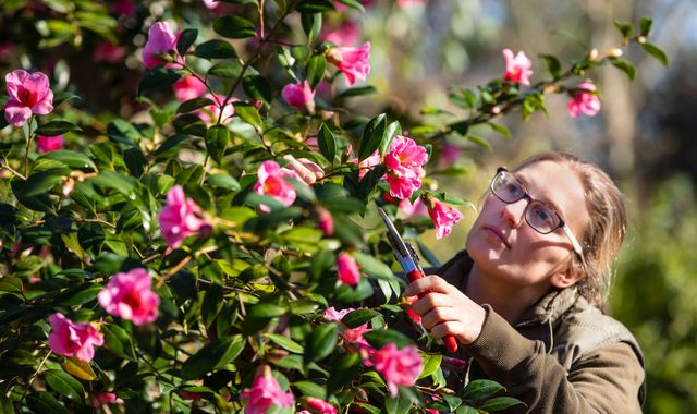 Fragrant February: Floral scents stronger thanks to warmer weather, RHS says