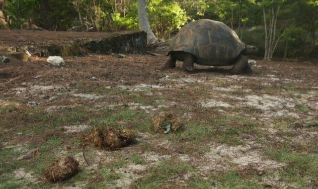 Plastic pollution: Flip-flop found in poo of endangered Indian Ocean tortoise