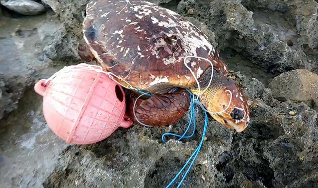 Deep Ocean Live: Plastic wrecks remote Indian Ocean turtle nesting island