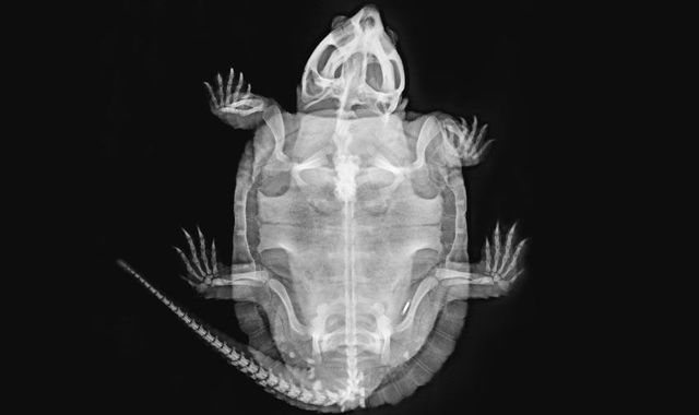 London Zoo releases stunning X-ray pictures of animals