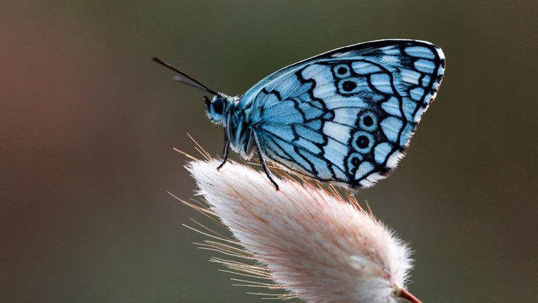 Scientists say agriculture, loss of habitat and climate change have affected insect populations