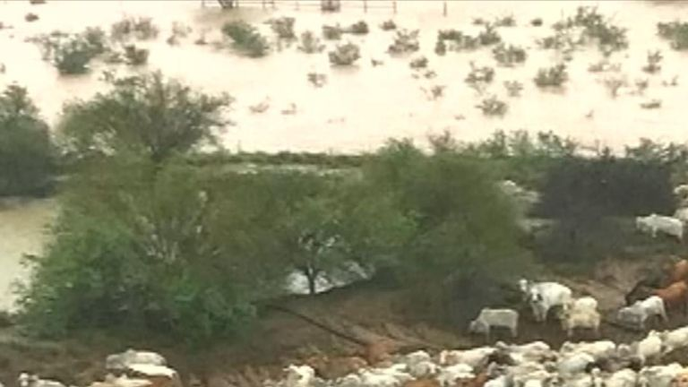 Australian Farmers struggle to evacuate cattle during record-breaking flooding, with 'hundreds of thousands' of cattle feared dead. Credit Cowan Down Station.