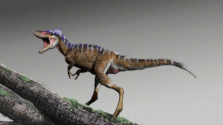Named moros intrepidus, the dinosaur roamed north America. Pic: Jorge Gonzalez