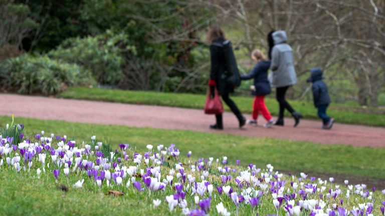 Crocus flowers in the Royal Botanic Garden, Edinburgh