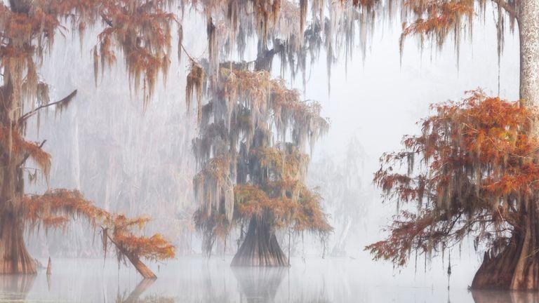Trees, Woods & Forests winner: Misty Bayou, by Roberto Marchegiani, Atchafalaya Basin, Louisiana, USA