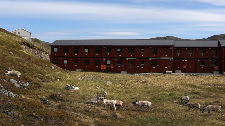 Reindeer graze near a building in Hammerfest, Norway, June 14, 2018.