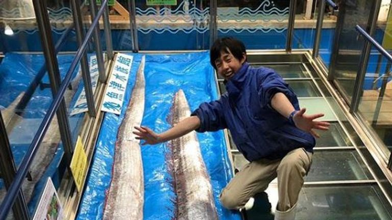 A keeper at the Uozu Aqarium posed with two oarfish found in fishing nets on Friday. Pic: Uozu Aquarium