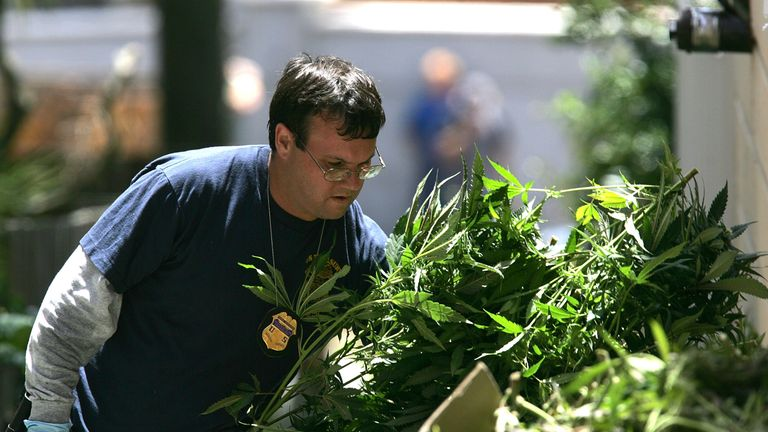 SAN FRANCISCO - JUNE 22: A Federal law enforcement agent carries a pile of marijuana plants seized during a raid of a medicinal marijuana club June 22, 2005 in San Franciso, California. The U.S. Supreme Court recently ruled that Federal authorities may prosecute sick people whose doctors prescribe marijuana to ease pain, concluding that state laws don't protect users from a federal ban on the drug. (Photo by Justin Sullivan/Getty Images)