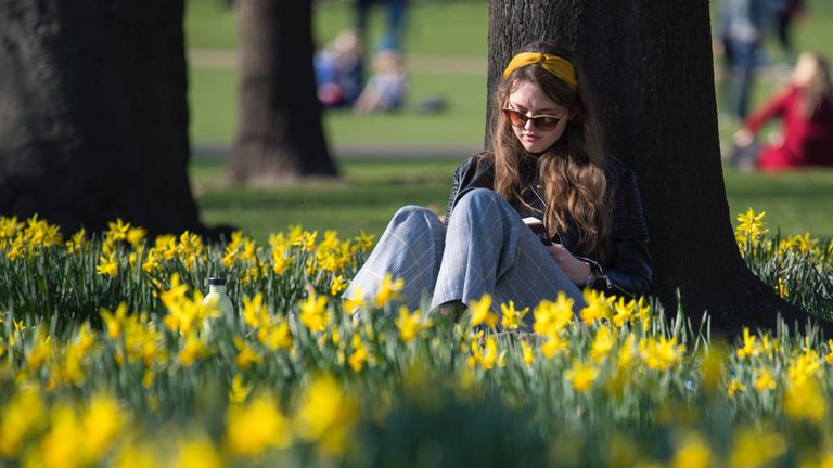 A woman reads among the blooming daffodils in St James Park, central London