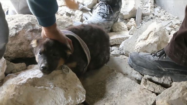 Puppies rescued from rubble in Syria