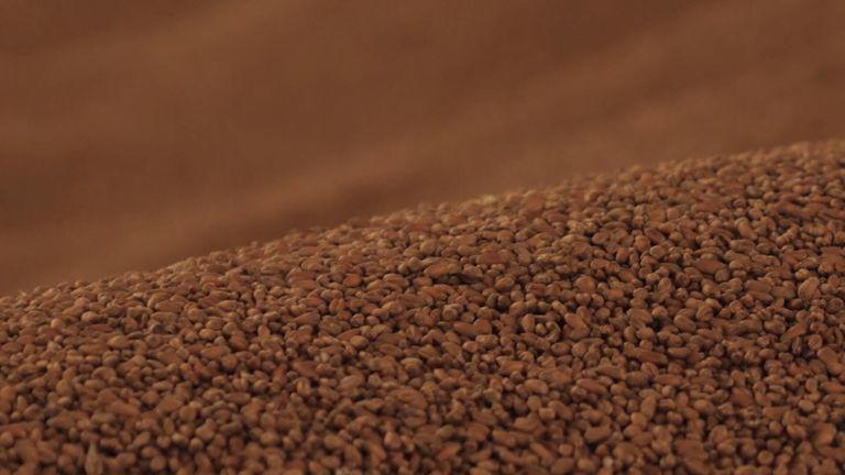 Grain in a silo