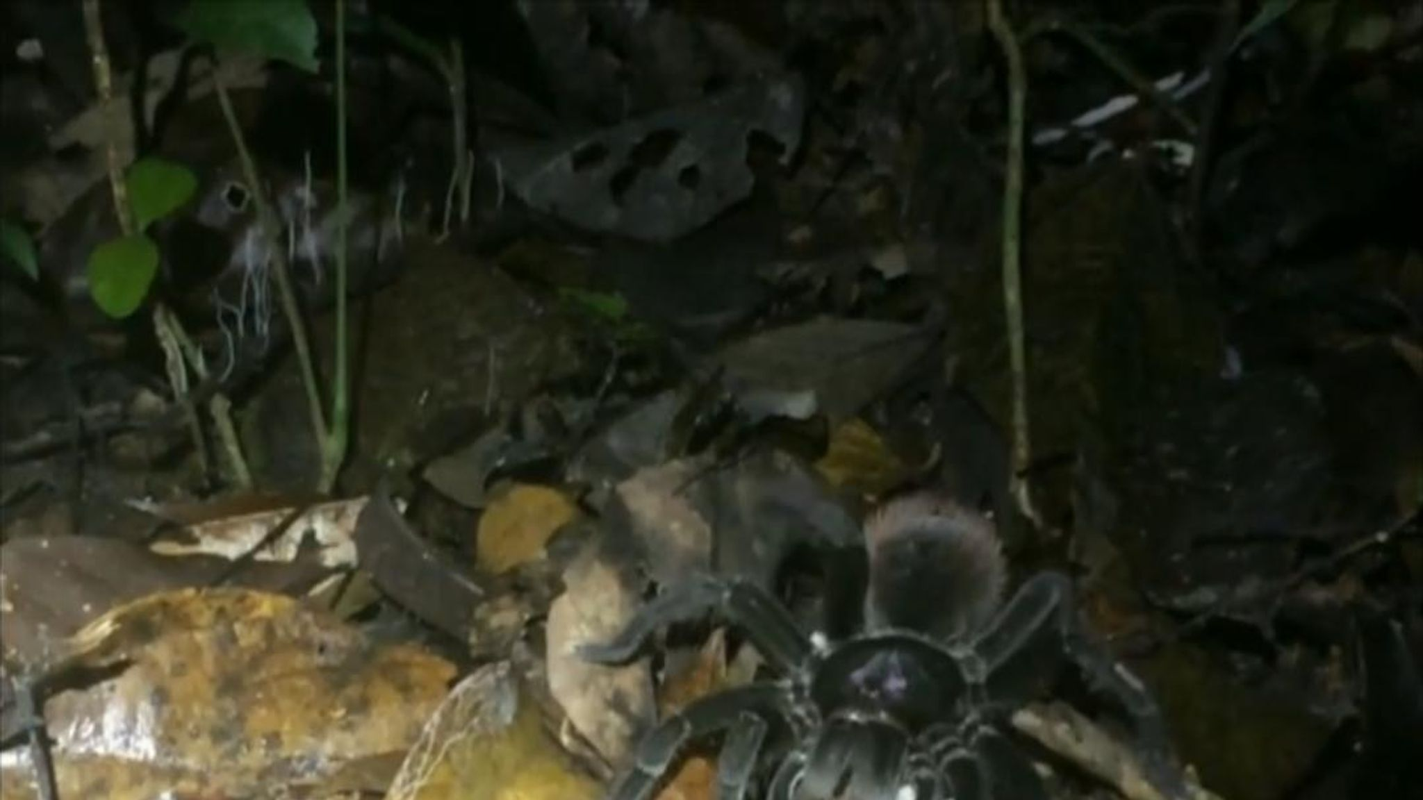 A Woman In Peru Came Across A Scene That Will Cause Give Anyone Suffering From Arachnophobia To Have Sleepless Nights
