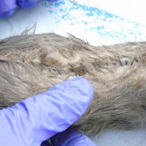 Drug rats: Contraband smuggled into prison inside dead rodents