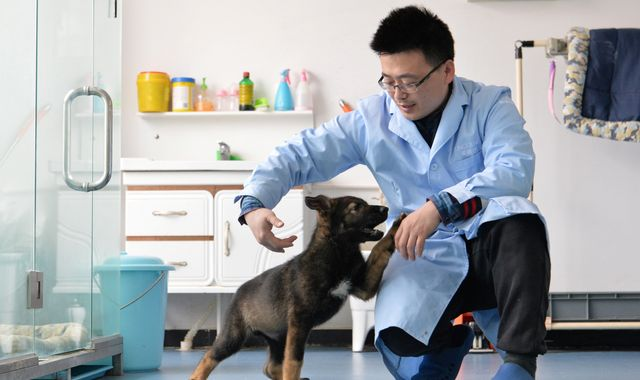 China clones 'Sherlock Holmes of police dogs' to cut training costs