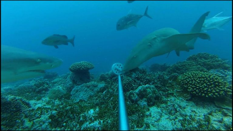Sharks swimming around a baited camera near Aldabra