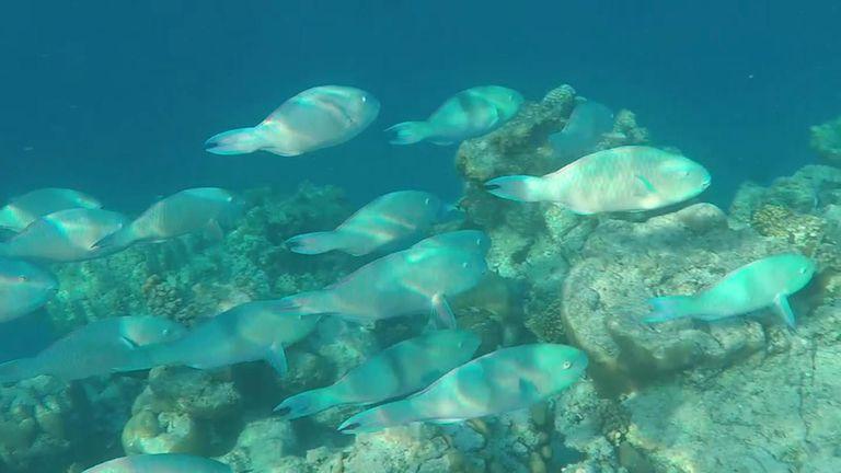Aldabra lagoon