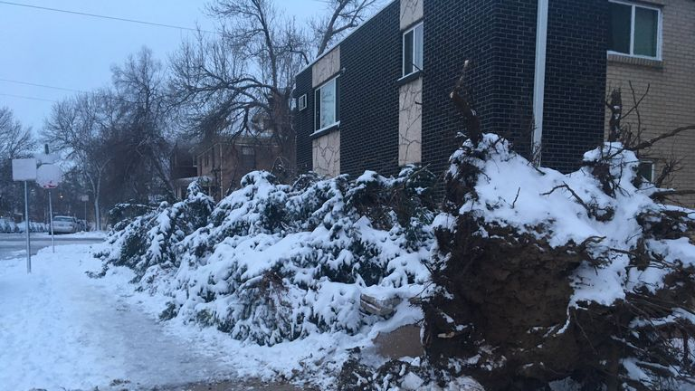 Fallen tree in Denver, Colorado. Pic: Brett Forest/Jake Leininger
