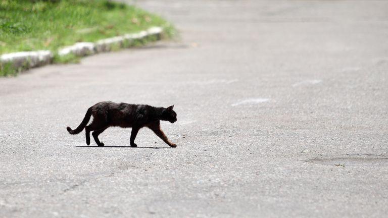 Cat crossing road
