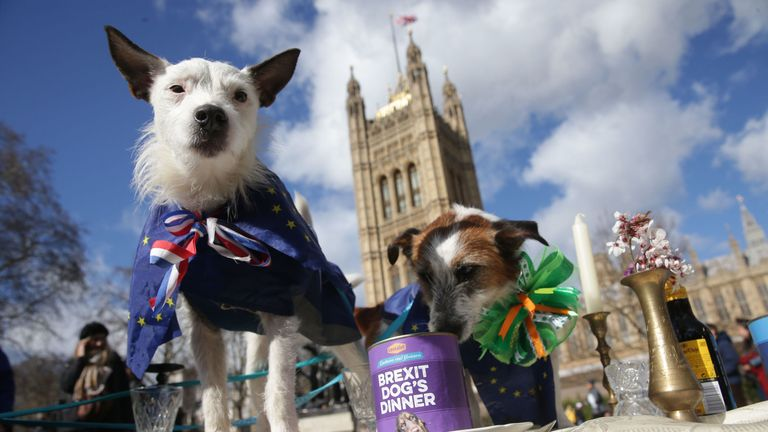TOPSHOT - Dogs are posed on a table outside the Houses of Parliament during stunt organised by the anti-Brexit Wooferendum campaign in central London on March 10, 2019 where the group have labled Brexit a 'dog's dinner'. - British MPs will on Tuesday vote again on Prime Minister Theresa May's Brexit deal, making the historic decision whether to back her plan or risk a chaotic exit from the EU in less than three weeks time. (Photo by Daniel LEAL-OLIVAS / AFP) (Photo credit should read DANIEL LEAL