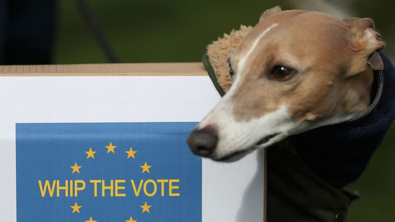 A dog wears an EU flag-themed placard outside the Houses of Parliament during stunt organised by the anti-Brexit Wooferendum campaign in central London on March 10, 2019 where the group have labled Brexit a 'dog's dinner' and called for it to be stopped. - British MPs will on Tuesday vote again on Prime Minister Theresa May's Brexit deal, making the historic decision whether to back her plan or risk a chaotic exit from the EU in less than three weeks time. (Photo by Daniel LEAL-OLIVAS / AFP) (Ph