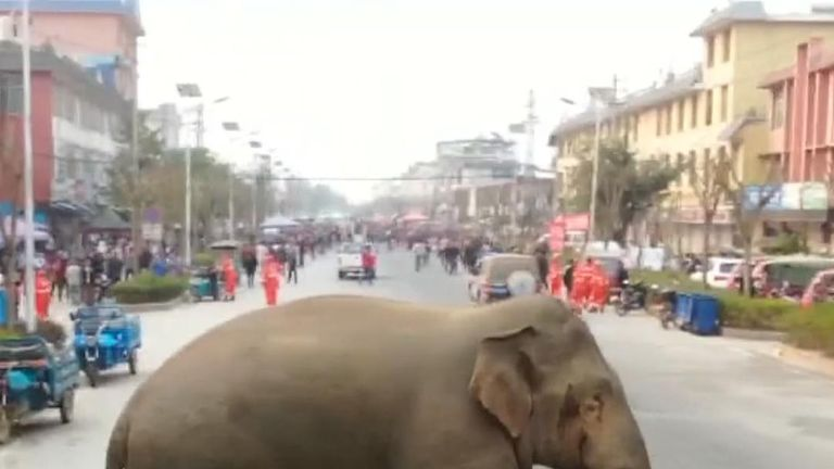An elephant was loose in the Chinese town of Meng-a. he damaged nine cars after being forced out of his herd