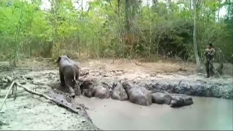 Elephants are rescued from muddy swamp in Thailand