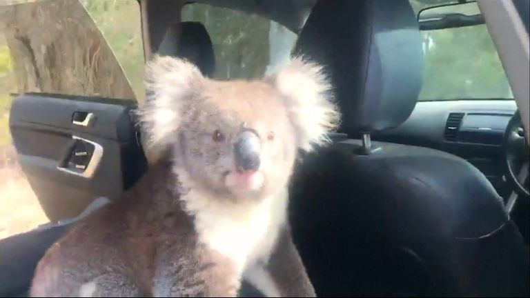 An unwelcome but adorable intruder climbed into a mans car and did not want to return to the hot weather outside.