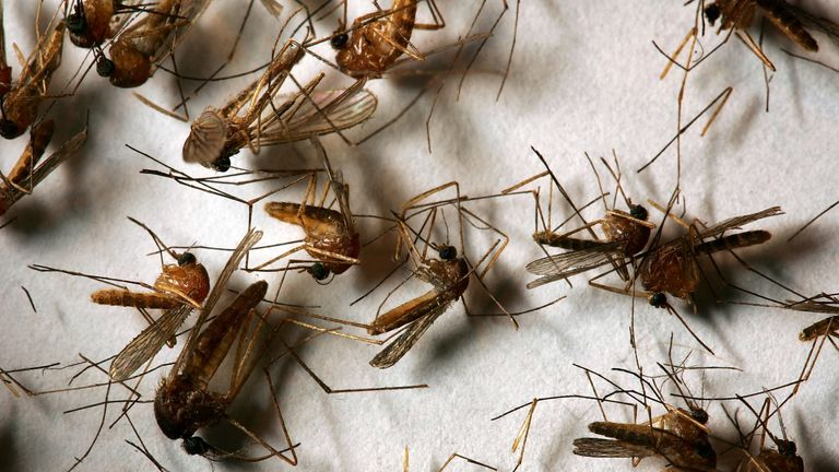 The mosquitoes attacked their guests as soon as they heard the way