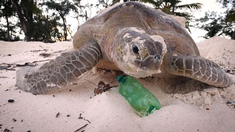 A turtle climbs over a plastic bottle on Aldabra