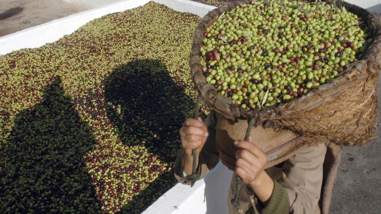 Olive oil is used by organised crime to make money