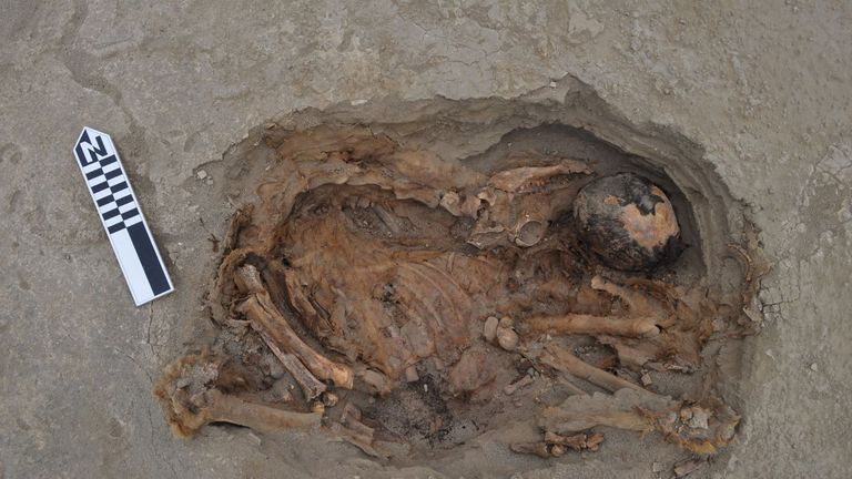 A light-brown camelid laying on top of a human body - from PLOS research at Pery mass grave. Pic: PLOS