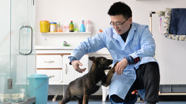 A researcher interacts with Kunxun, a dog cloned from a police dog, in Beijing, China