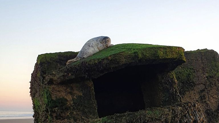 The grey seal was stuck for more than 24 hours