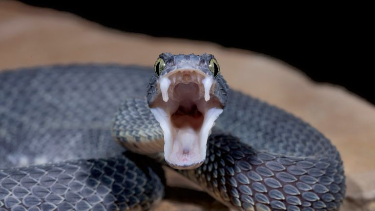 Some 47 peoplewent to hospital after 'contact' with venomous snakes and lizards
